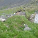 Iceland 2006 033